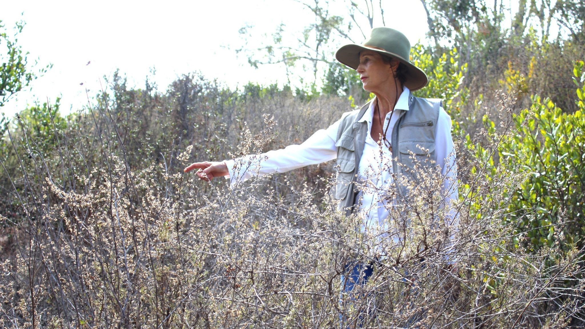 Edie Littlefield walked the entire 1,600 miles of El Camino Real from Loreto, Mexico to Sonoma, California.