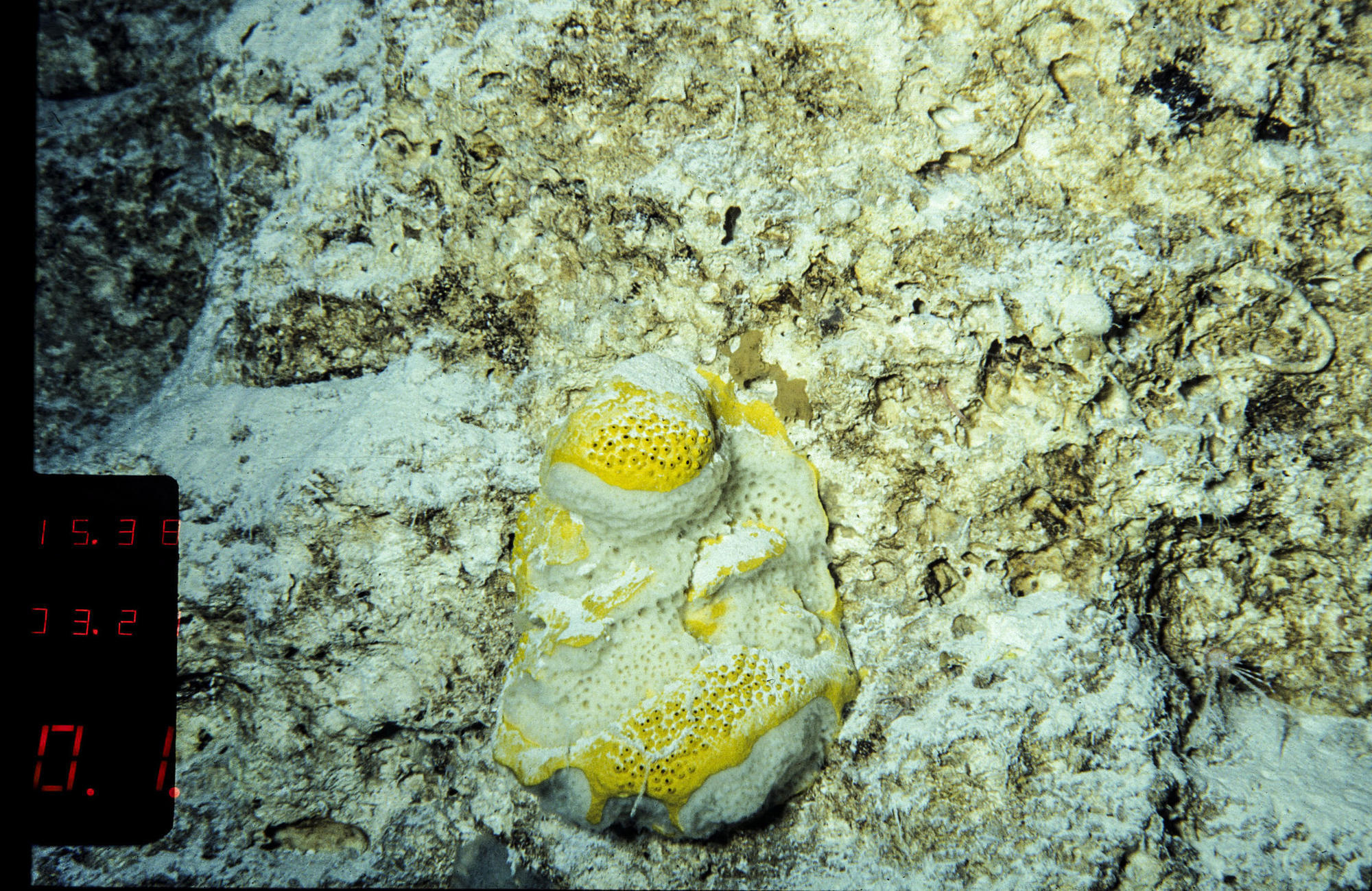 Sea sponges may hold key to fighting killer infections