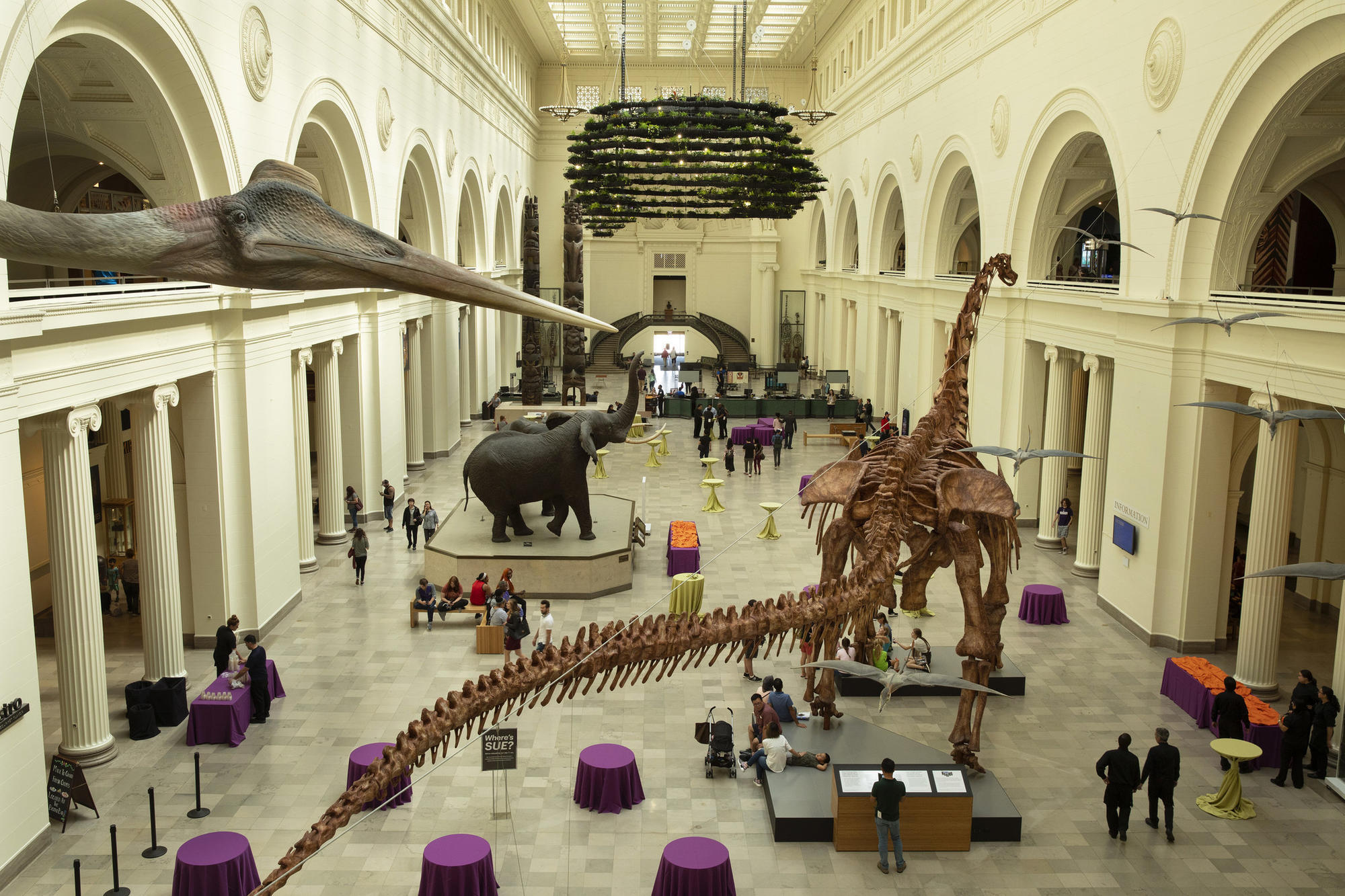 With A Skeleton And Megaplanters The Field Museum Fleshes