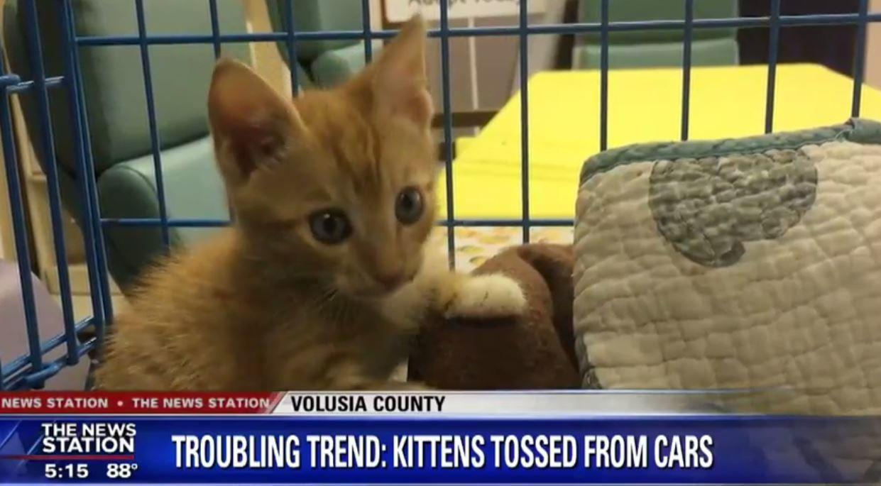 people are throwing kittens out of cars in volusia county orlando