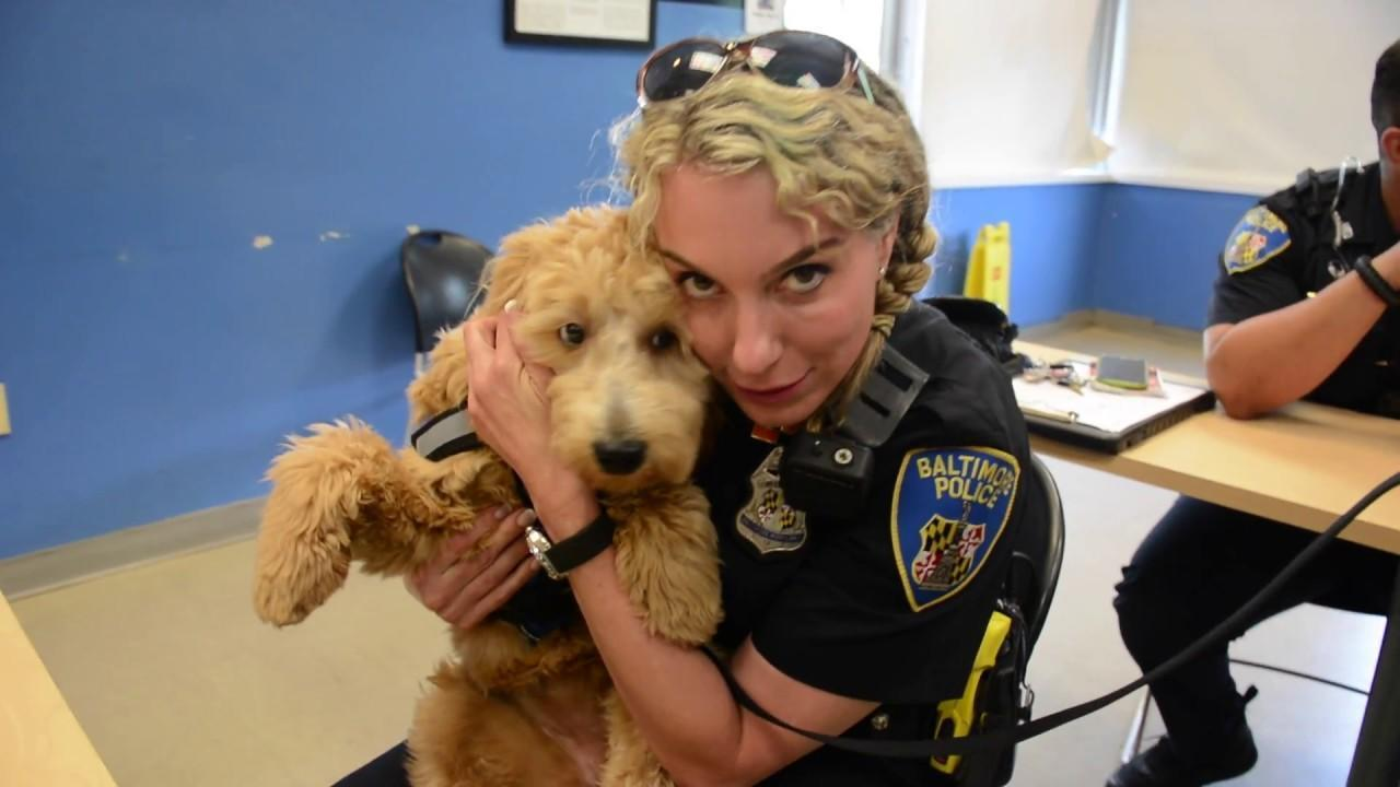 Baltimore Police Department Welcomes A Furry New Recruit Meet Penny