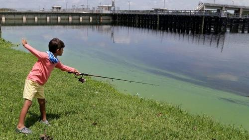 Algae less likely to slime Palm Beach or Broward