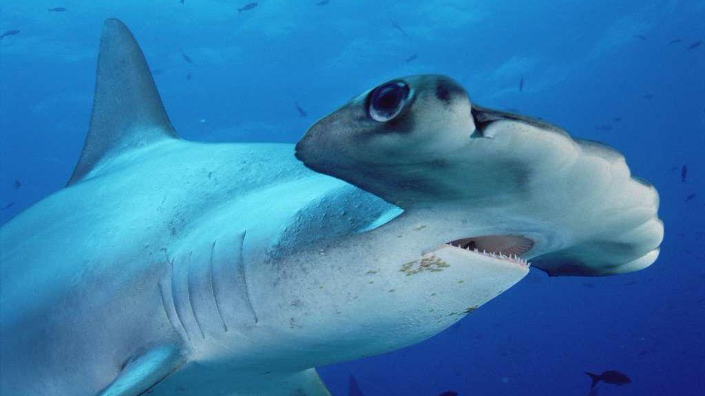 Hammerhead shark sighting prompts closure of Oceanside beach