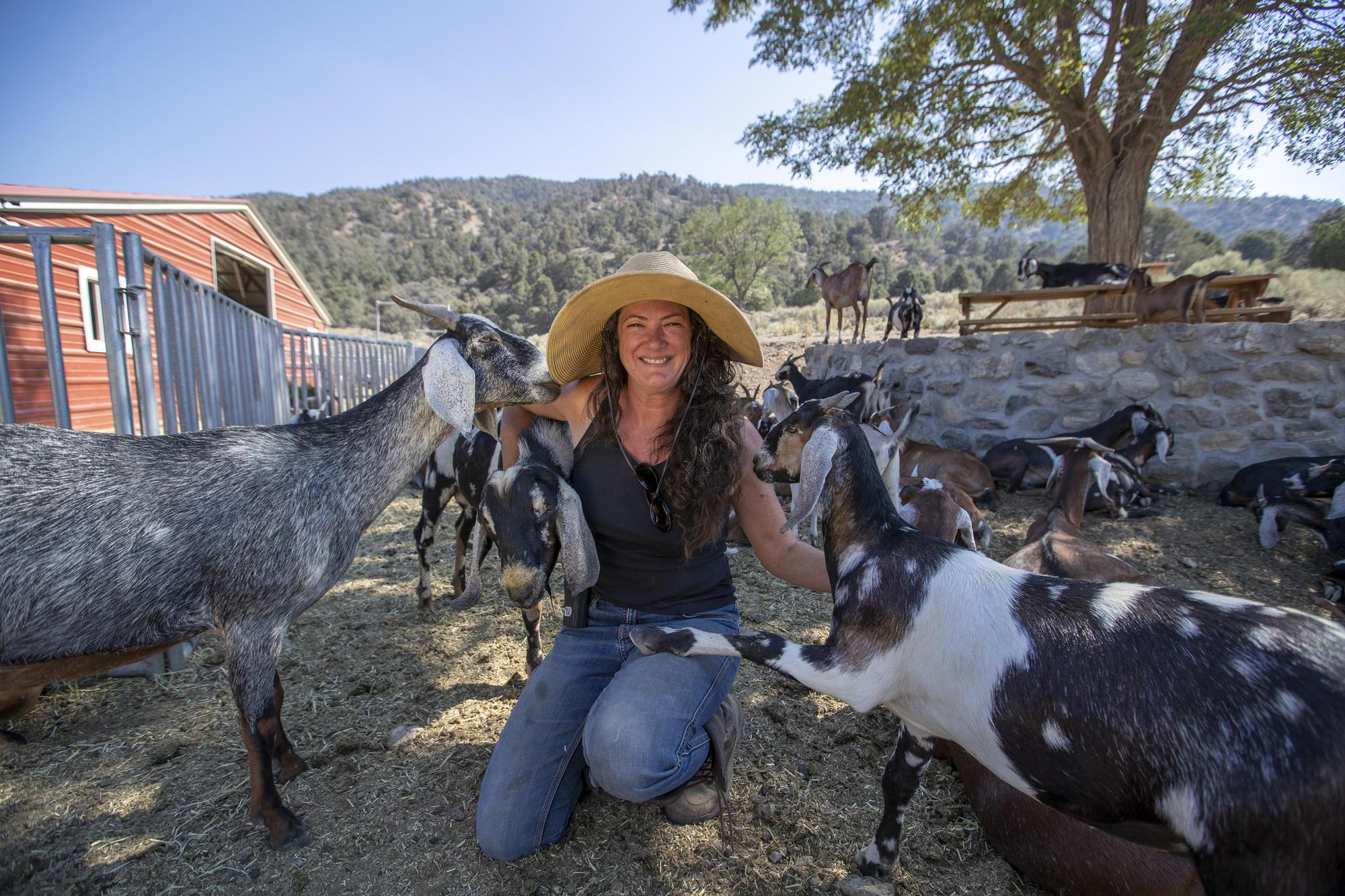 3055047_FO_angeles-crest-creamery-goat-farm_AJS
