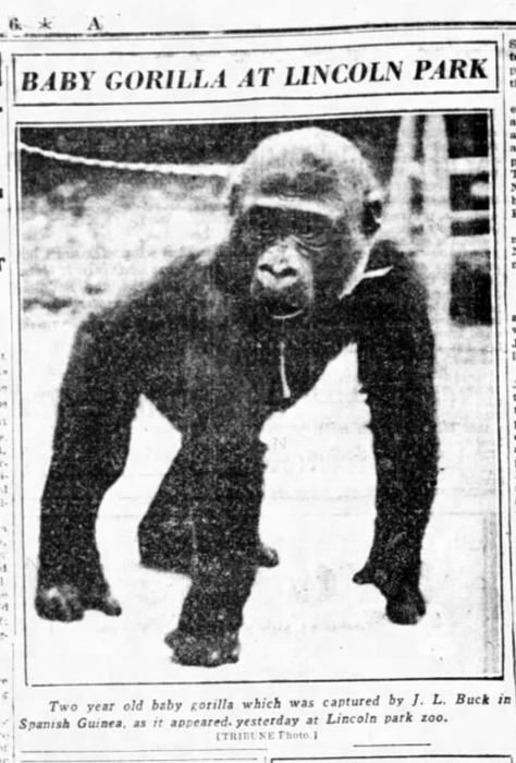 Bushman arrives at Lincoln Park Zoo, Aug. 16, 1930