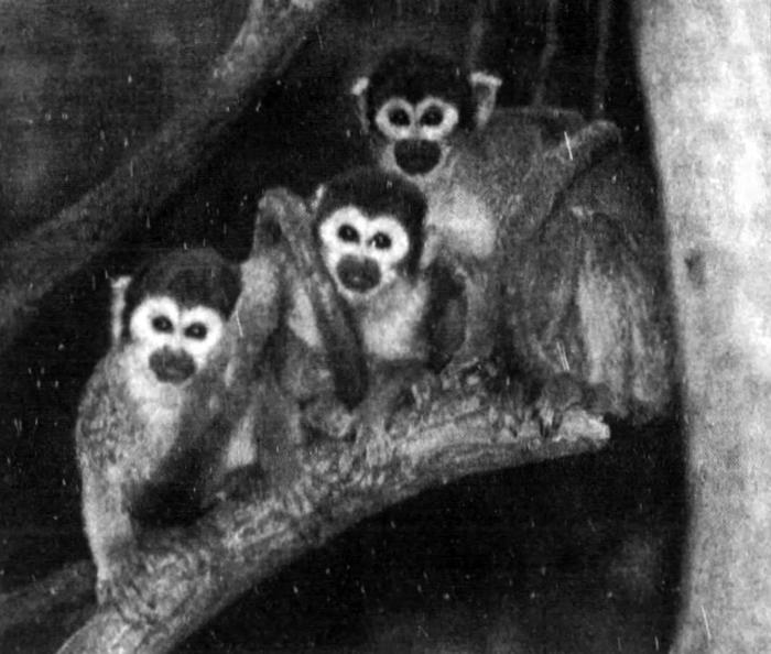 Primate House reopens, 1992