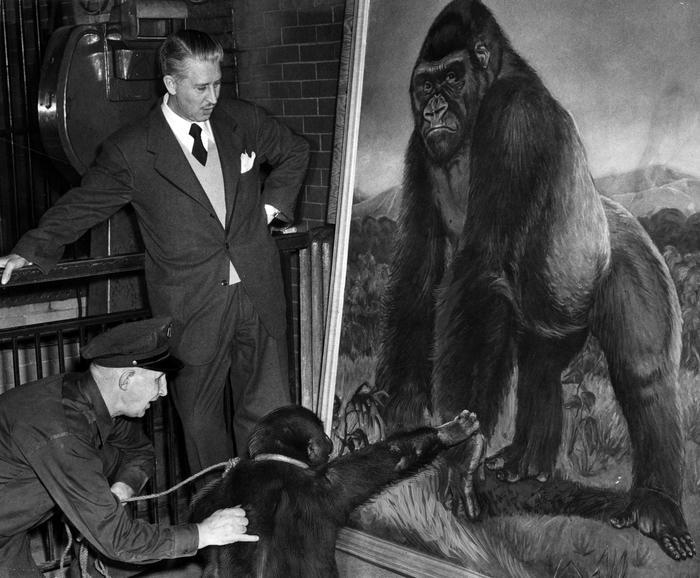 Long ago Bushman the Gorilla was the star at the Lincoln ... |Bushman Gorilla Death