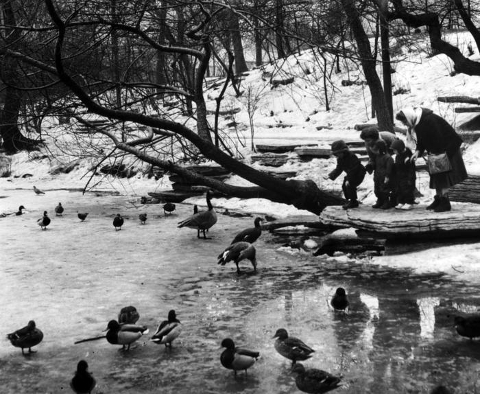 Lincoln Park Rookery, 1959