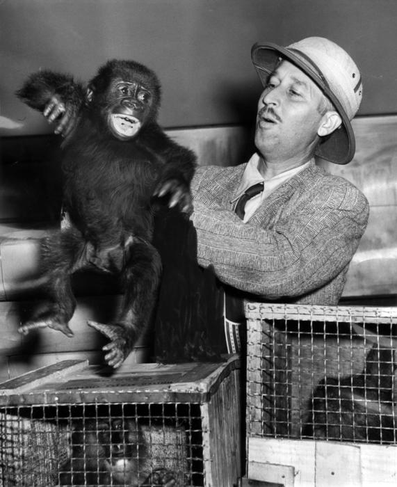 Marlin Perkins and gorilla, Irvin Young, 1947