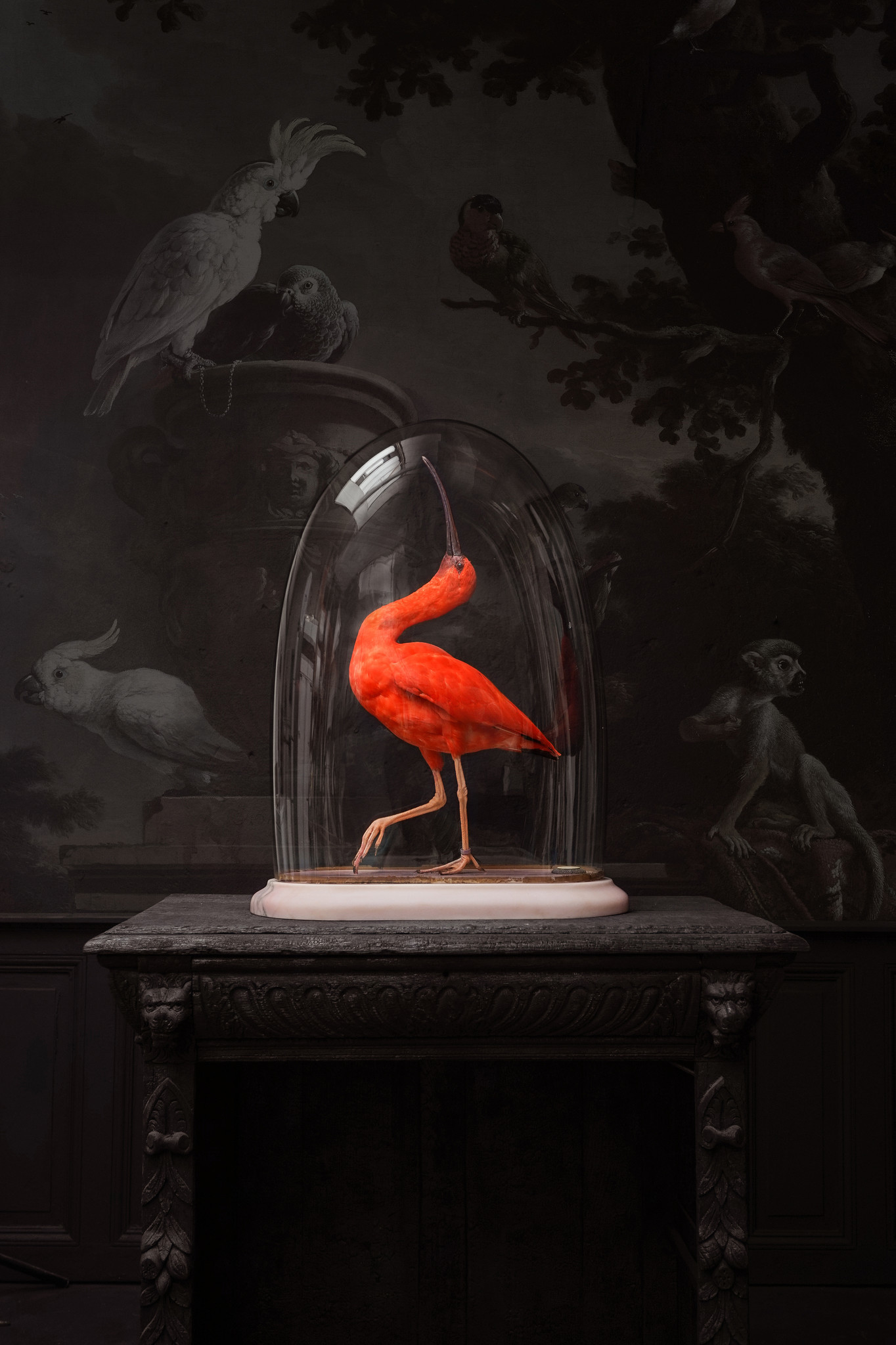 A scarlet ibis