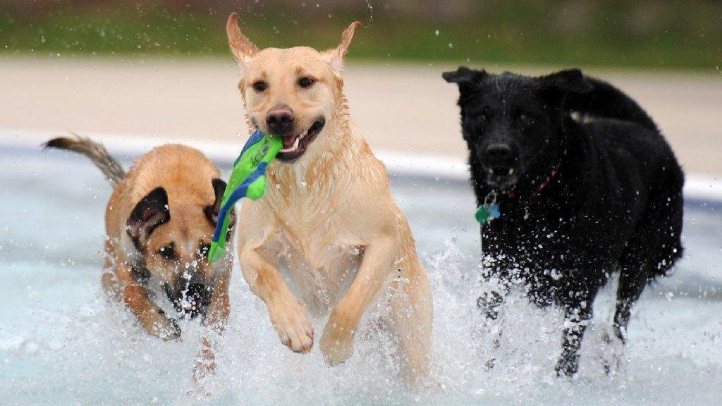 Water Barks South Florida Parks Are Opening For Dogs Southflorida