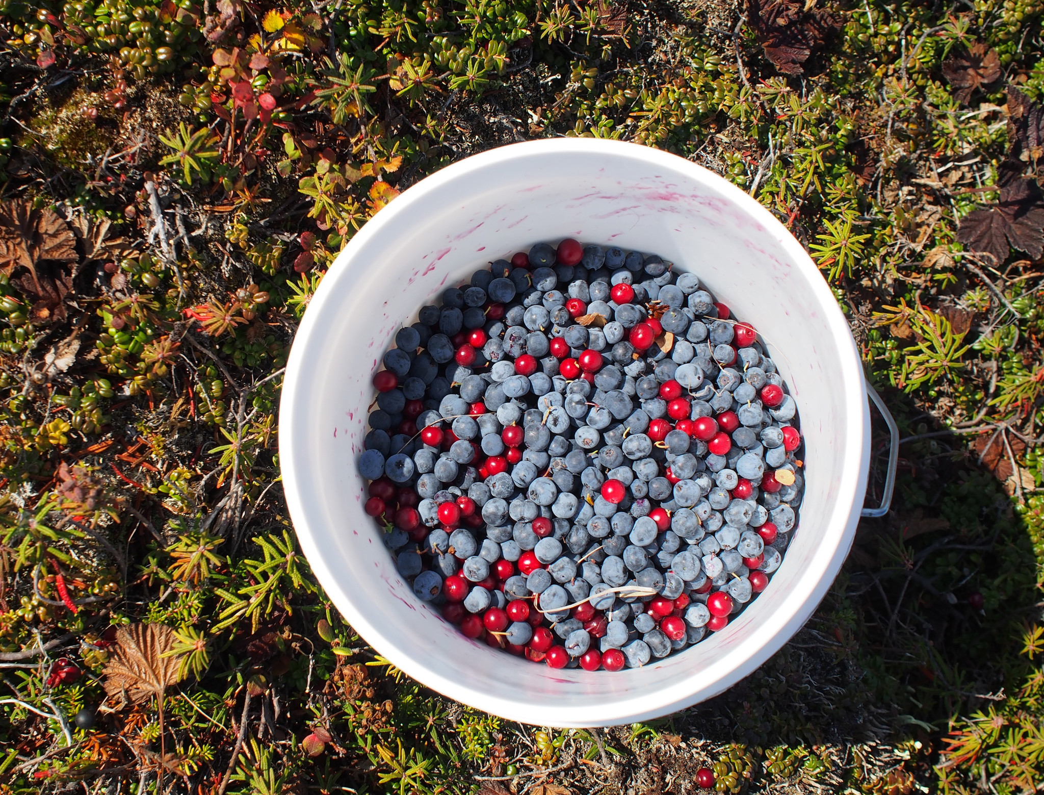 A half full berry bucket.