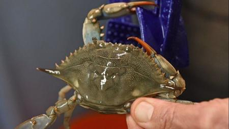 Sexually transmitted disease called crabs in baltimore