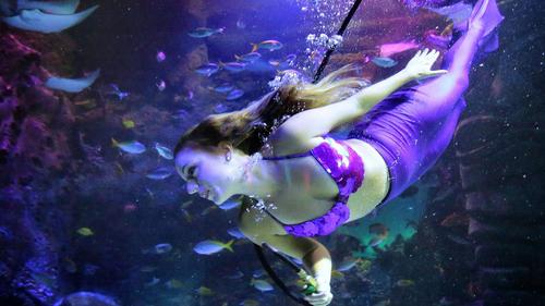 Amelia Island Travel & Vacation Guide - Orlando Sentinel