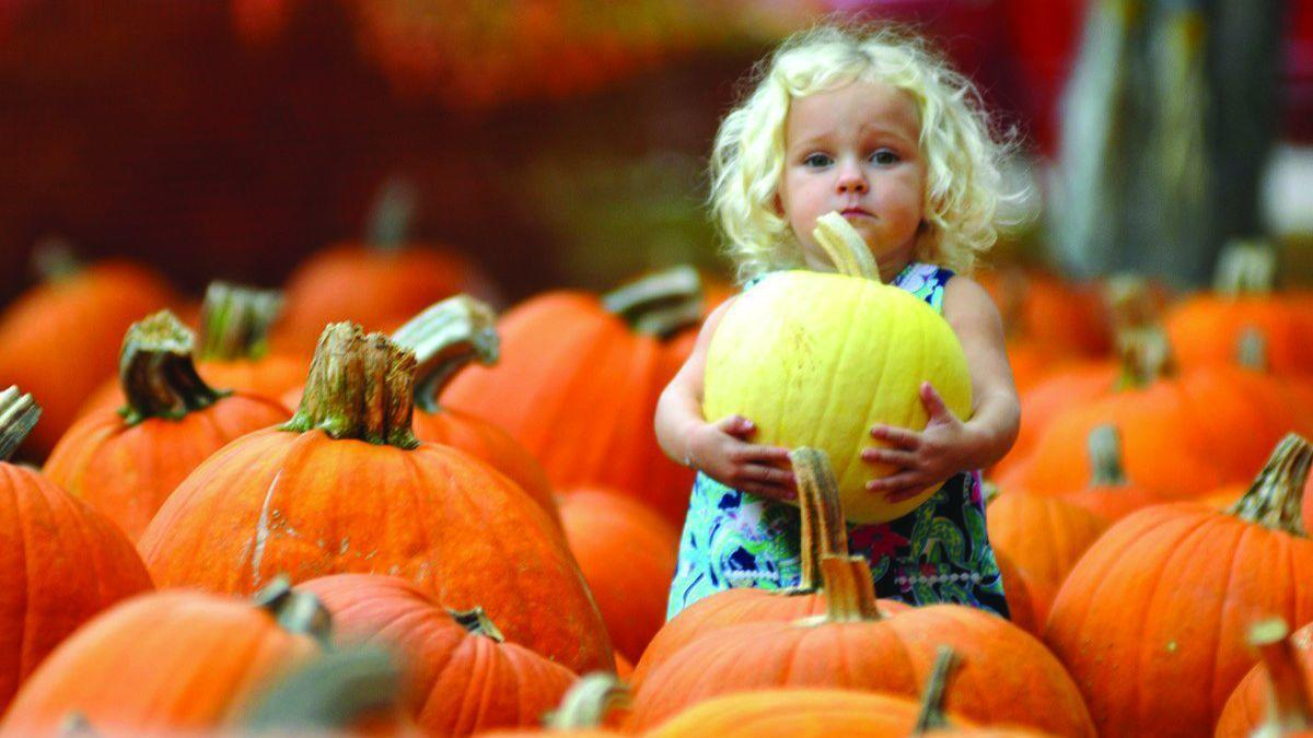 october family fests in south florida - southflorida