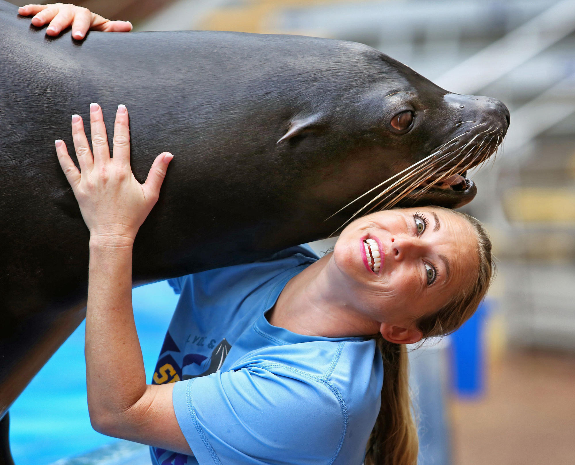 12 facts from SeaWorld's sea lion, seal tour - Orlando ...