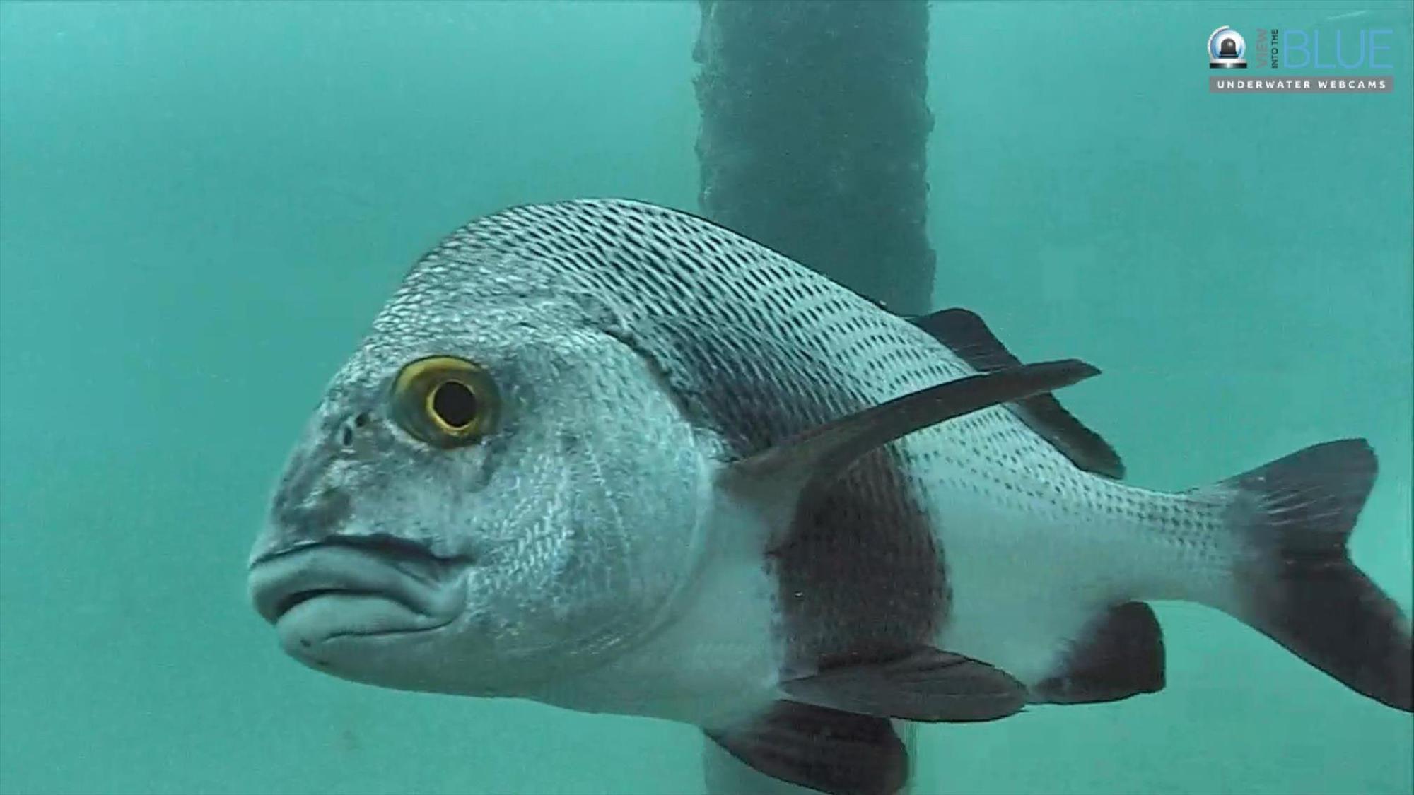 Anti Lightning Tool Will Help Keep Deerfield S Fish Cam Online Sun Sentinel
