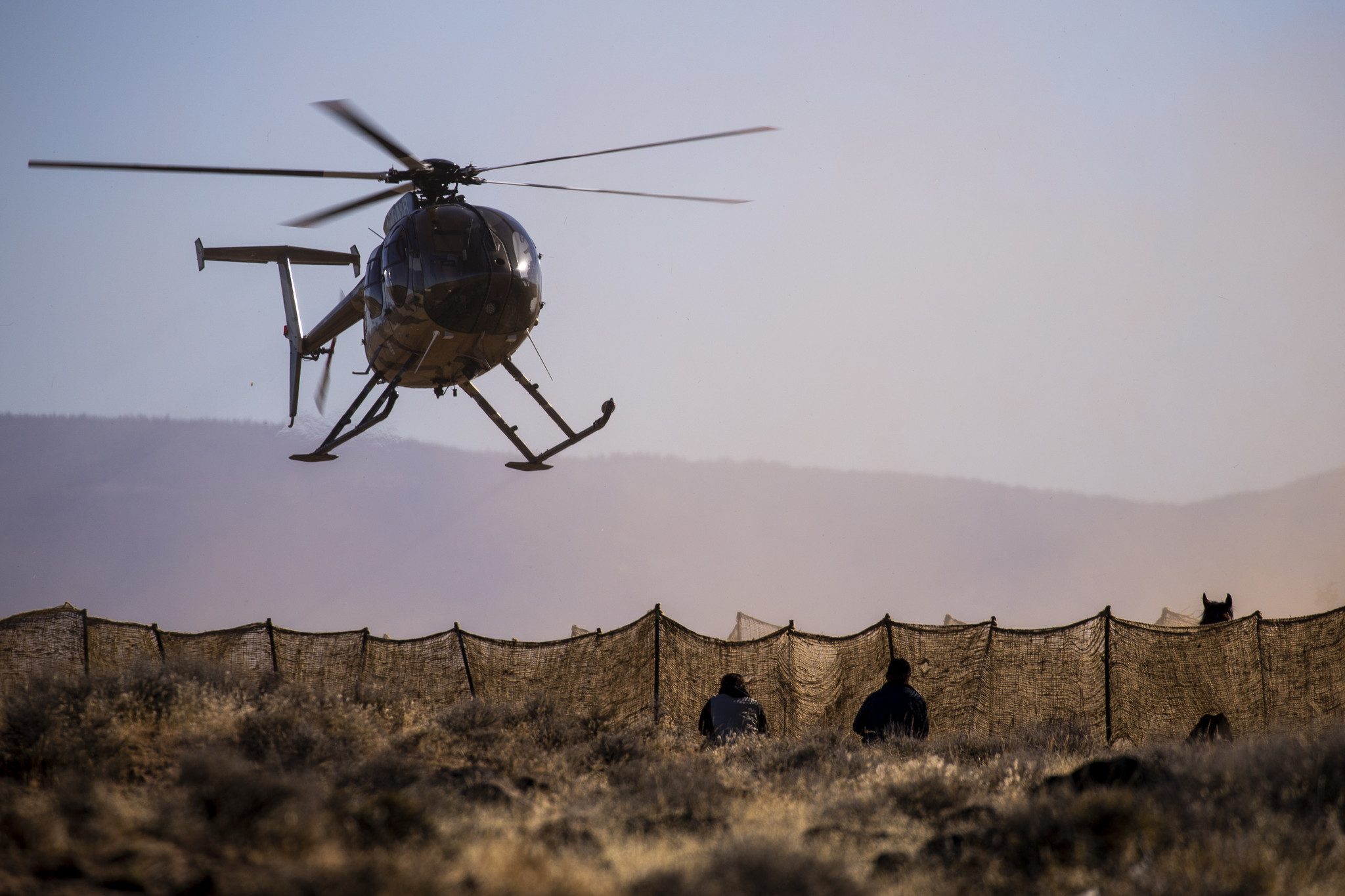 Wild horses are chased by helicopter as they are gathered in the Devil