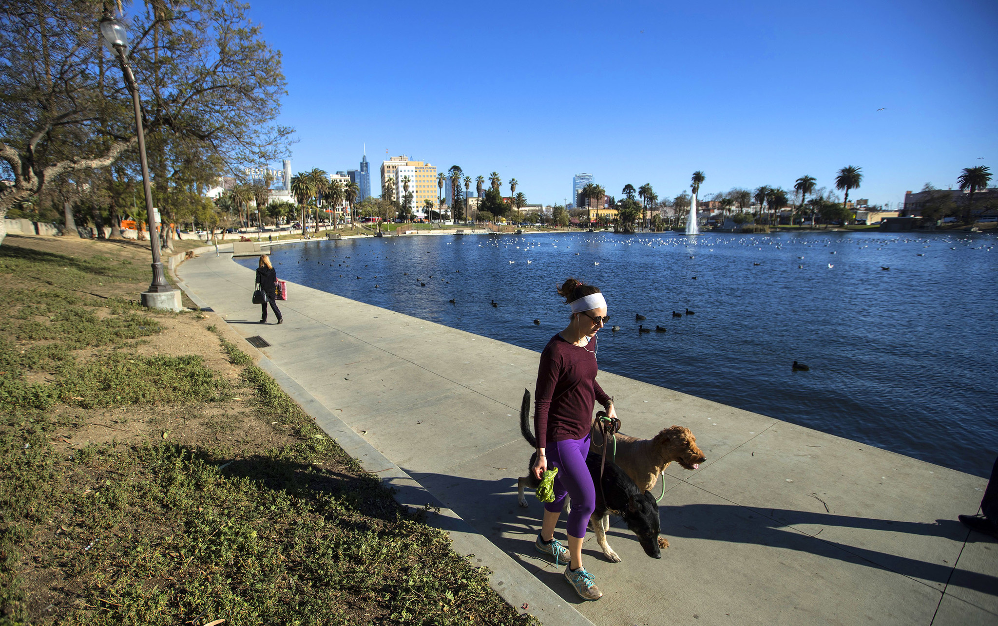 A jogger with two dogs runs around the lake at MacArthur Park