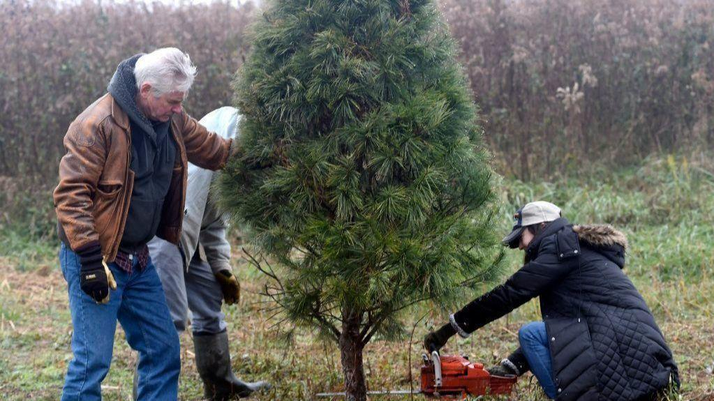 Christmas Tree Farms In Md