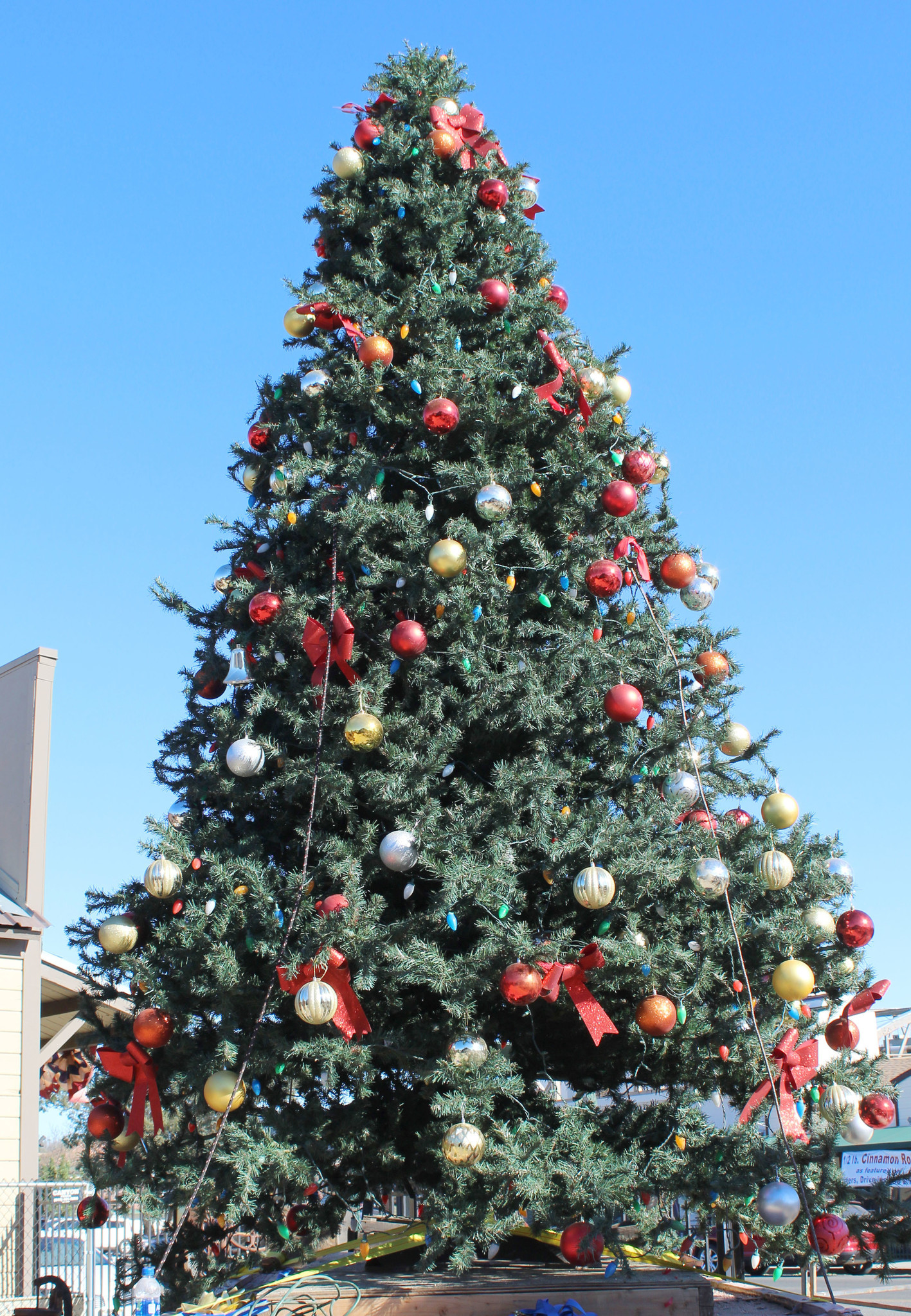 Santa Claus will be in town to light Ramona's Christmas tree at 6 p.m. on Saturday.