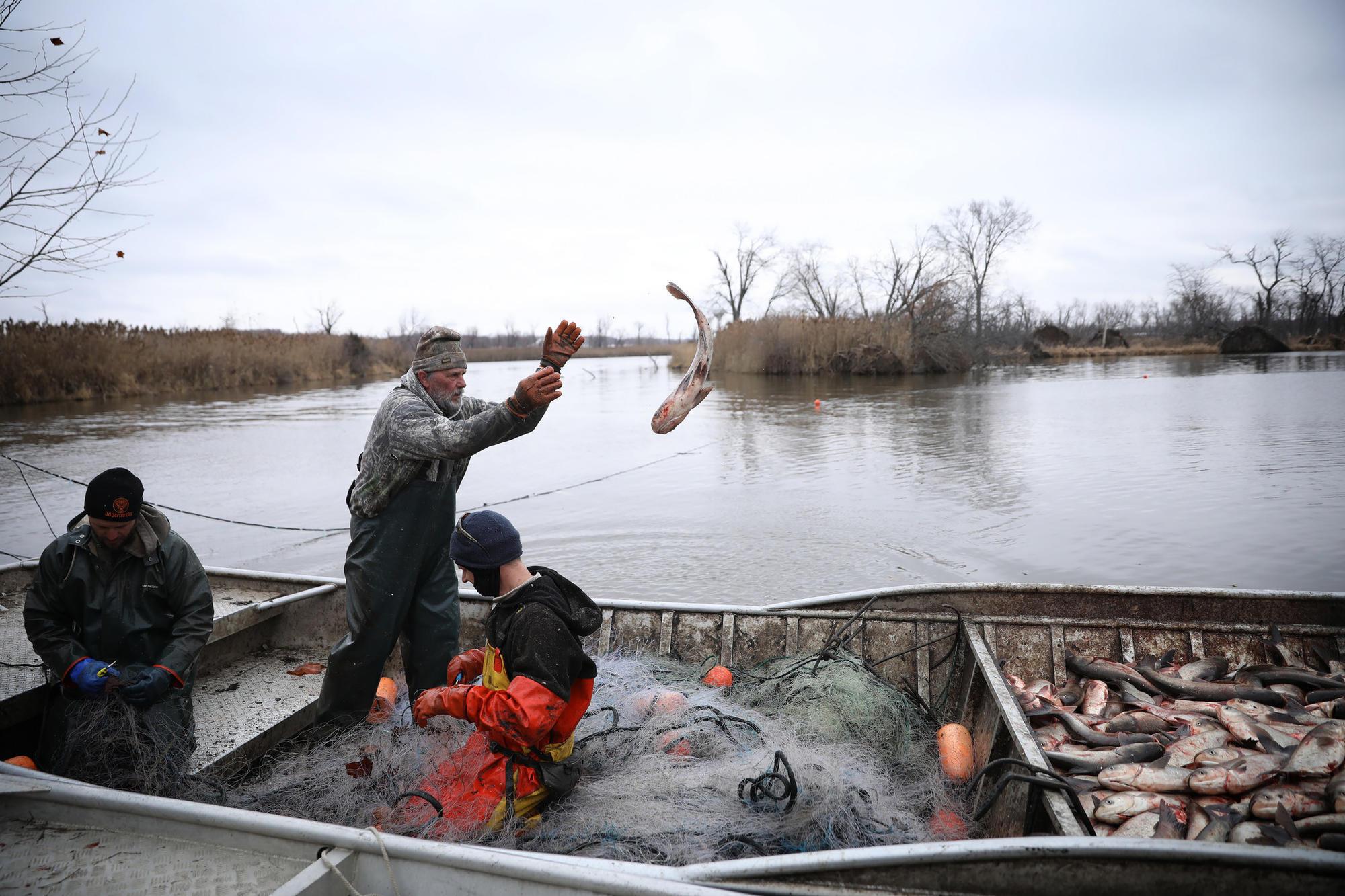 Asian carp jump into boat louisiana with