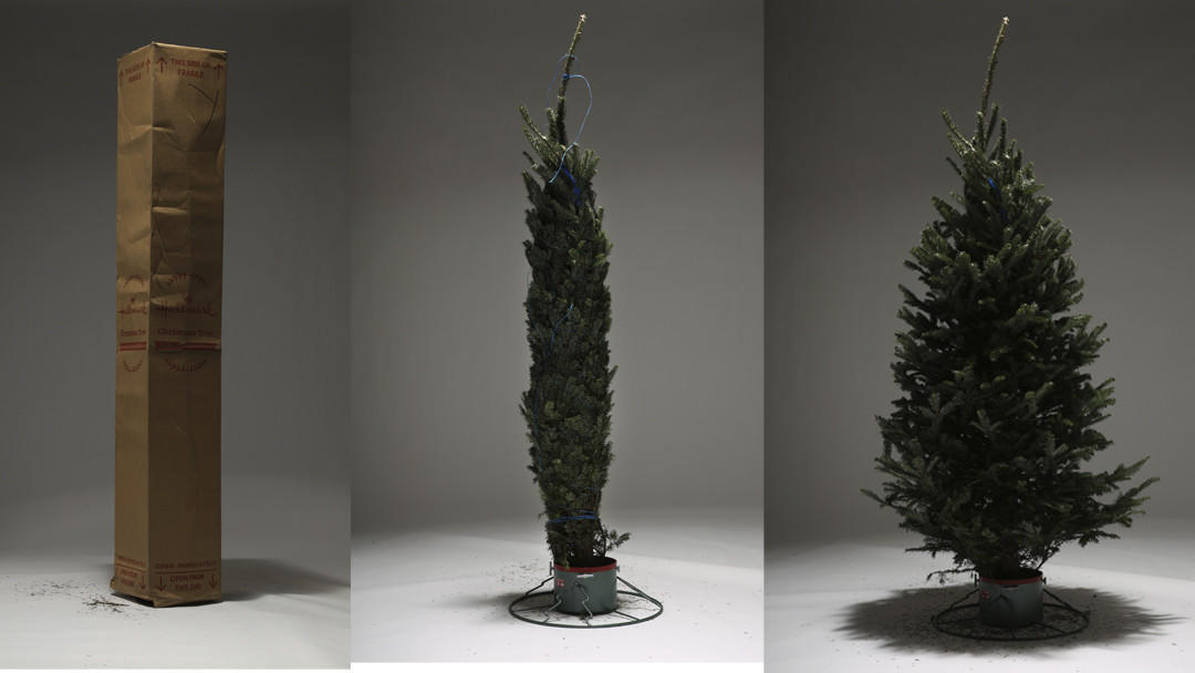 Would You Buy A Christmas Tree Online, Sight Unseen? We