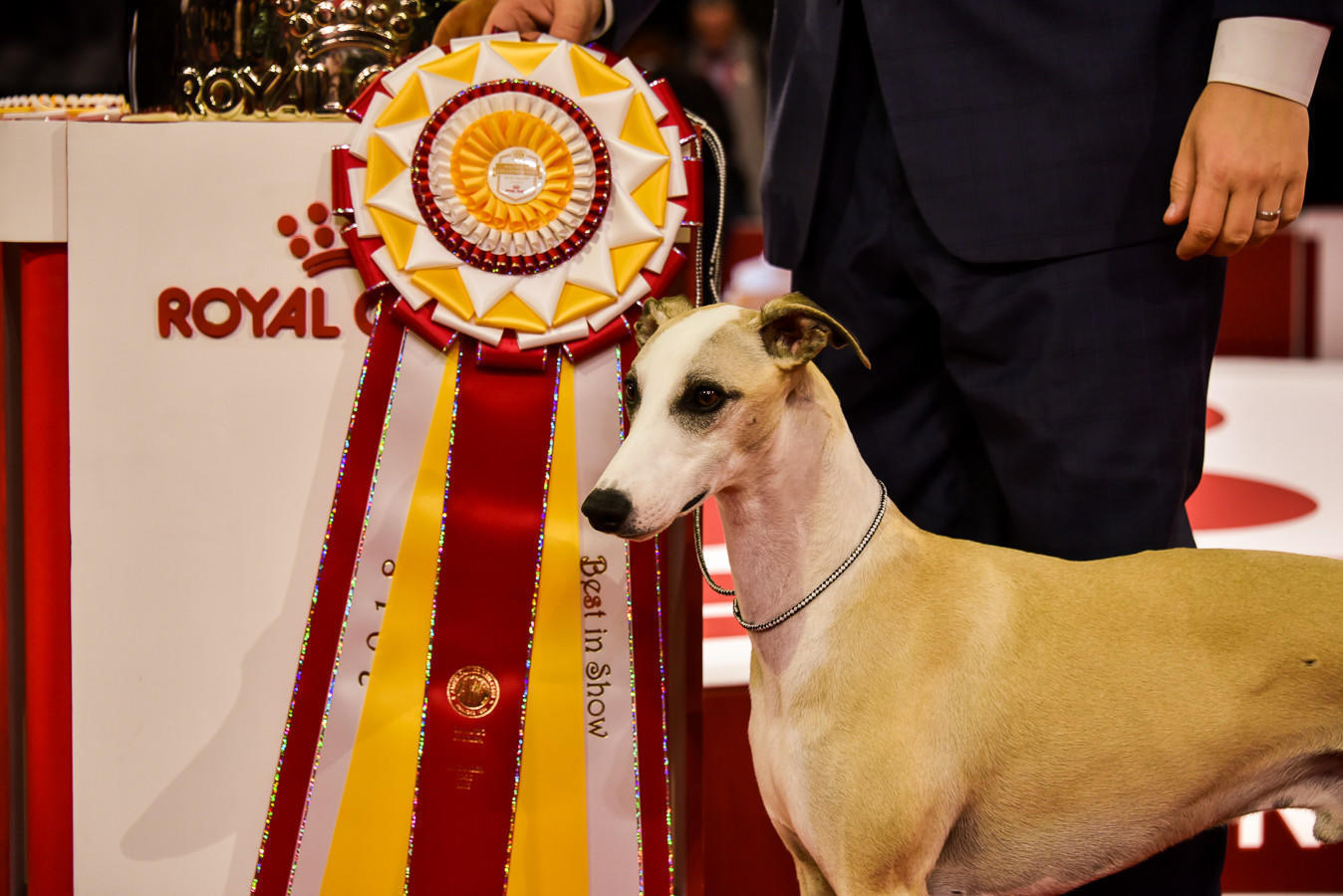 The Best Of Show At The 2018 Akc National Championship Is