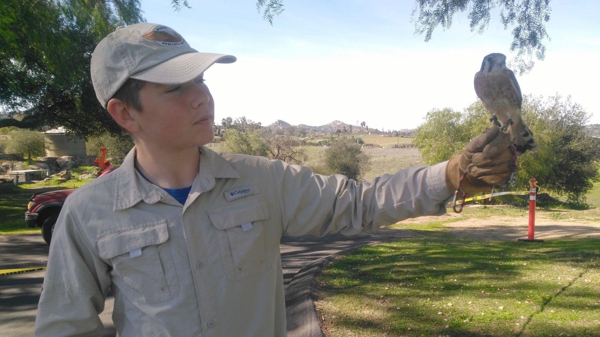 Wild Wings Research volunteer Carter Gailband displays a male American kestrel named Homer.