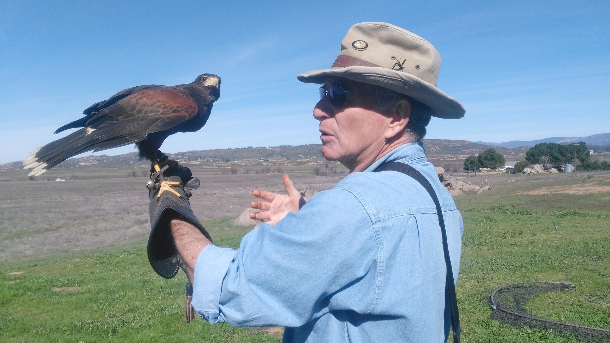 Bob Gordon holds Huxley, a Harris's hawk, at Hawk Watch. The Harris's hawk is considered one of the most social raptors, often hunting cooperatively and rearing young as a team.