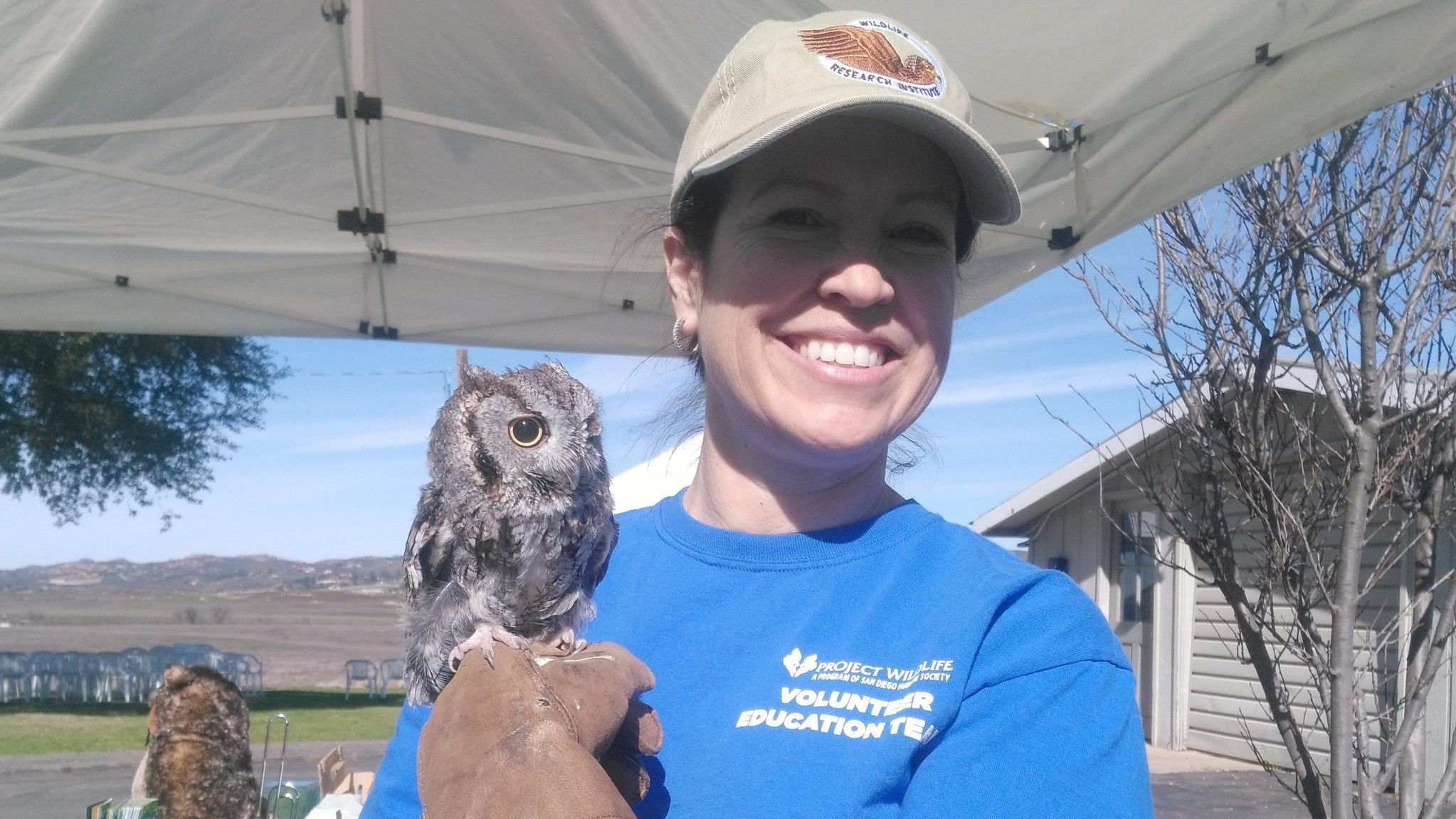 Project Wildlife volunteer Kristina Utne introduces Hawk Watch visitors to a western screech owl native to North and Central America. Utne said Luna may have been struck by a car.