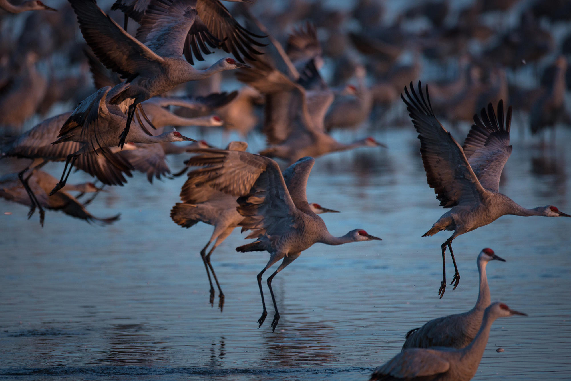 Spring Is In Air Cranes Are Returning >> March Magic Nebraska S Sandhill Crane Migration Gives New Meaning