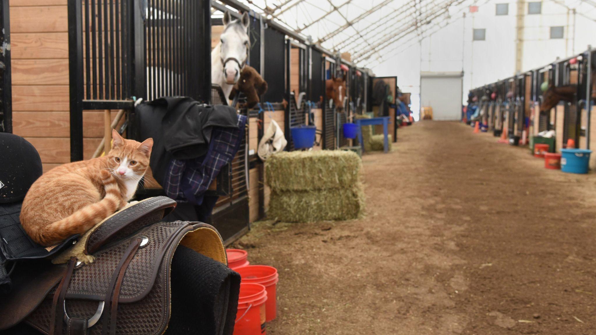 Barn at Laurel Park Race Course