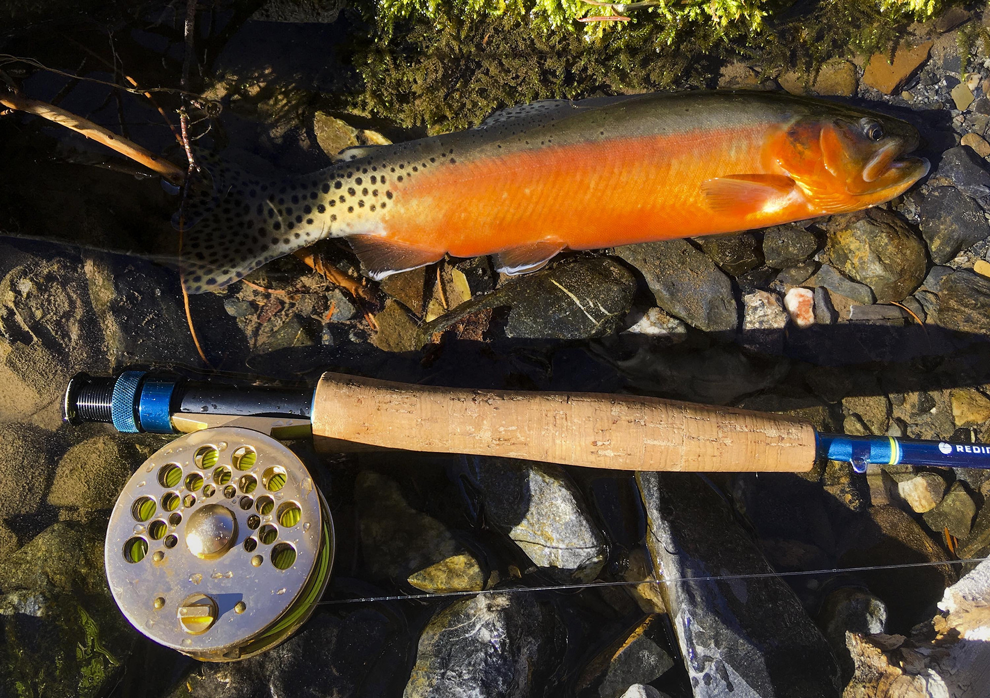 Oregon Trout Stocking Schedule