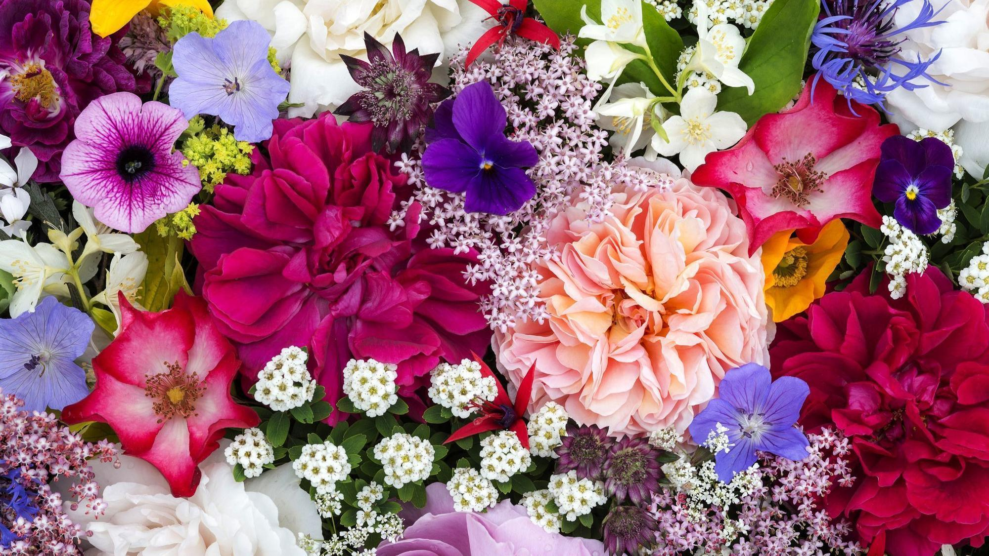 Floral delivery company FTD issues warning about its future