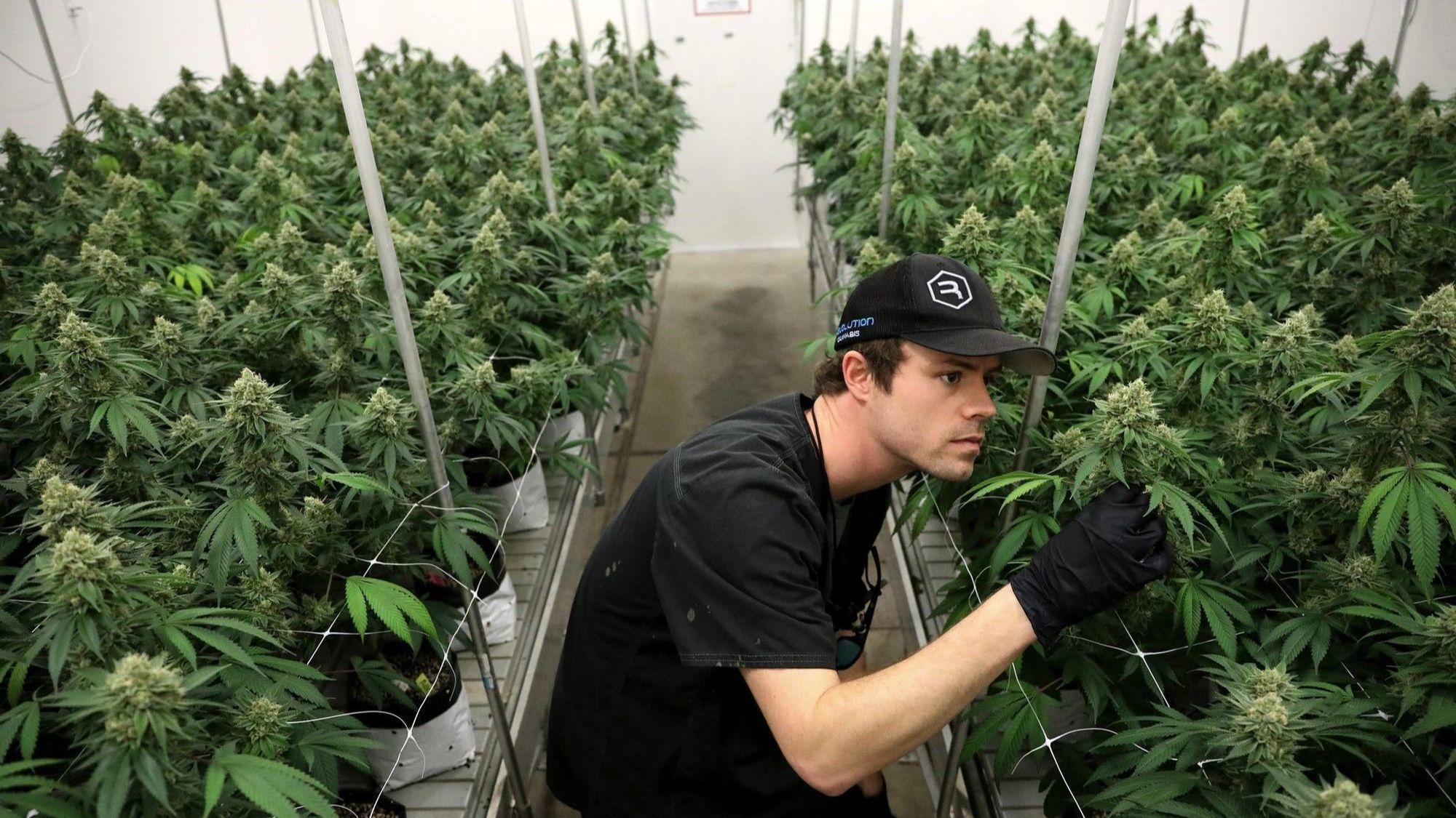 Proposal would make state medical pot program permanent, add osteoarthritis, chronic pain, autism, migraines, other conditions