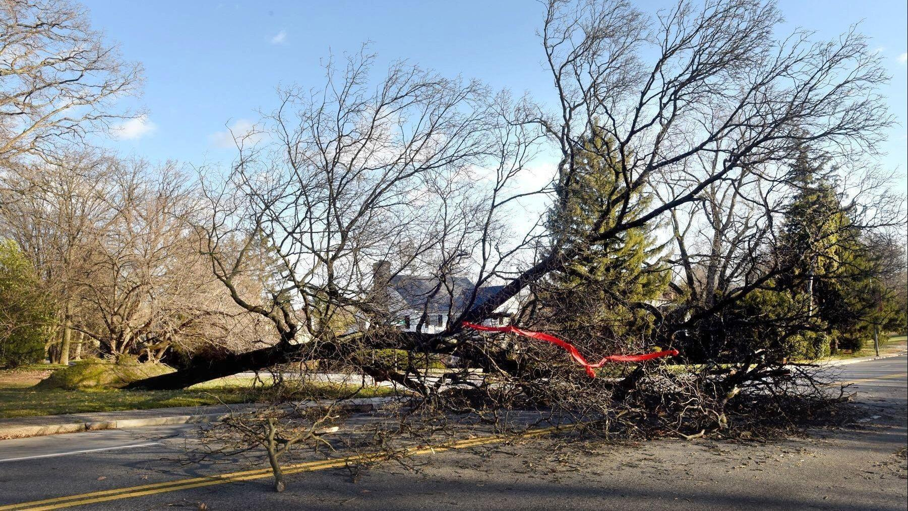 7 tips for checking your trees before high winds arrive in the Baltimore area