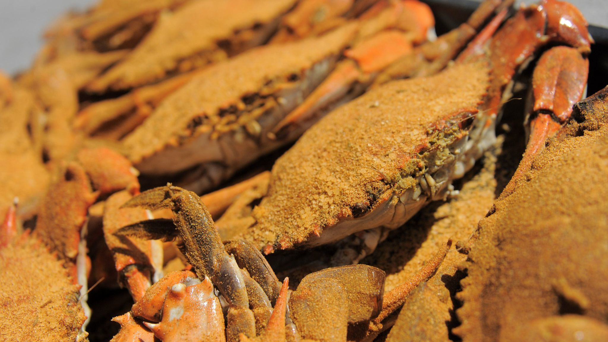 05/01/2014 -- Baltimore, MD -- A dozen steamed crabs at L.P. Steamers in Federal Hill Thursday., May