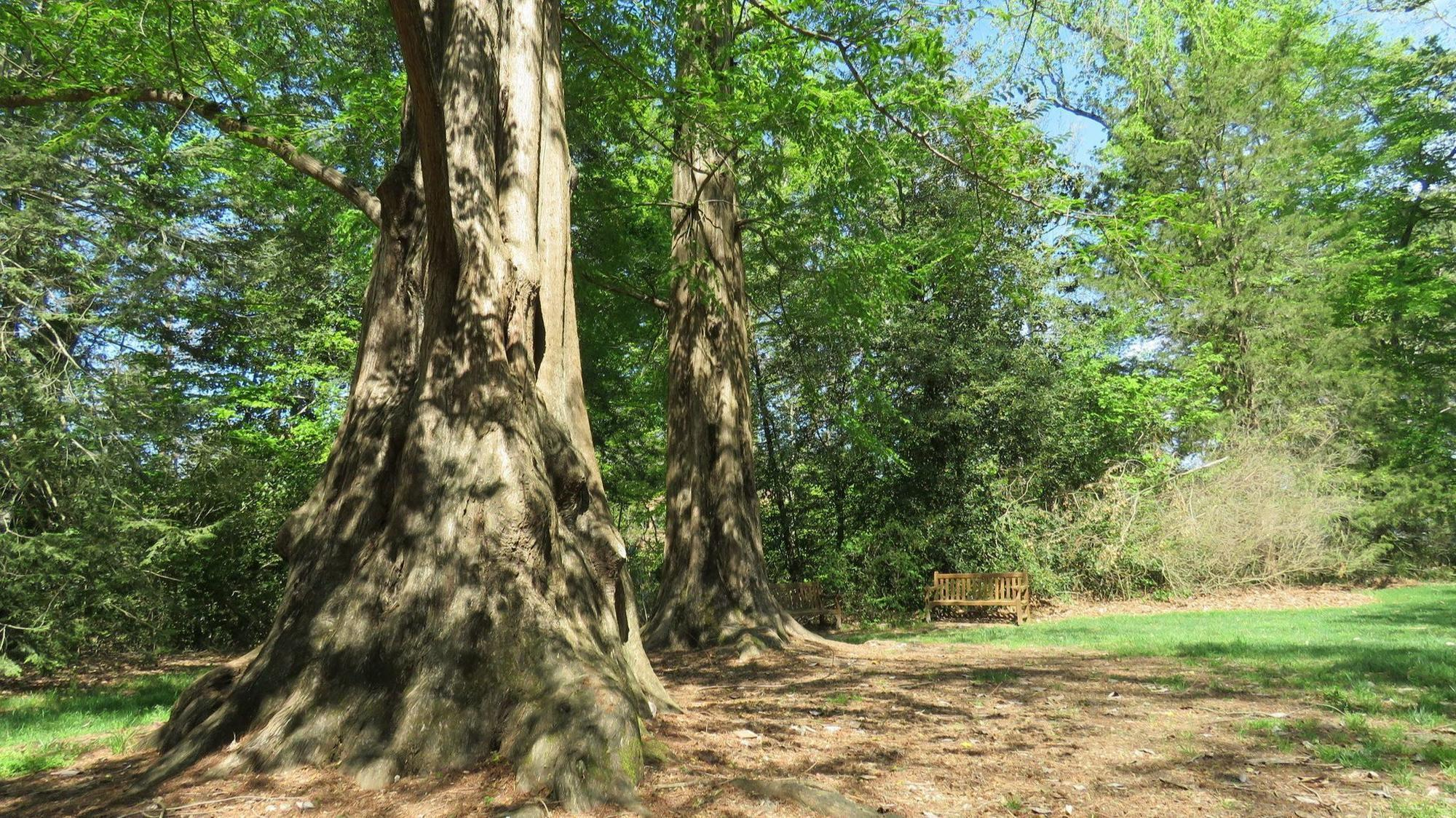 A Diverse Collection Of Trees Call William And Mary Home The