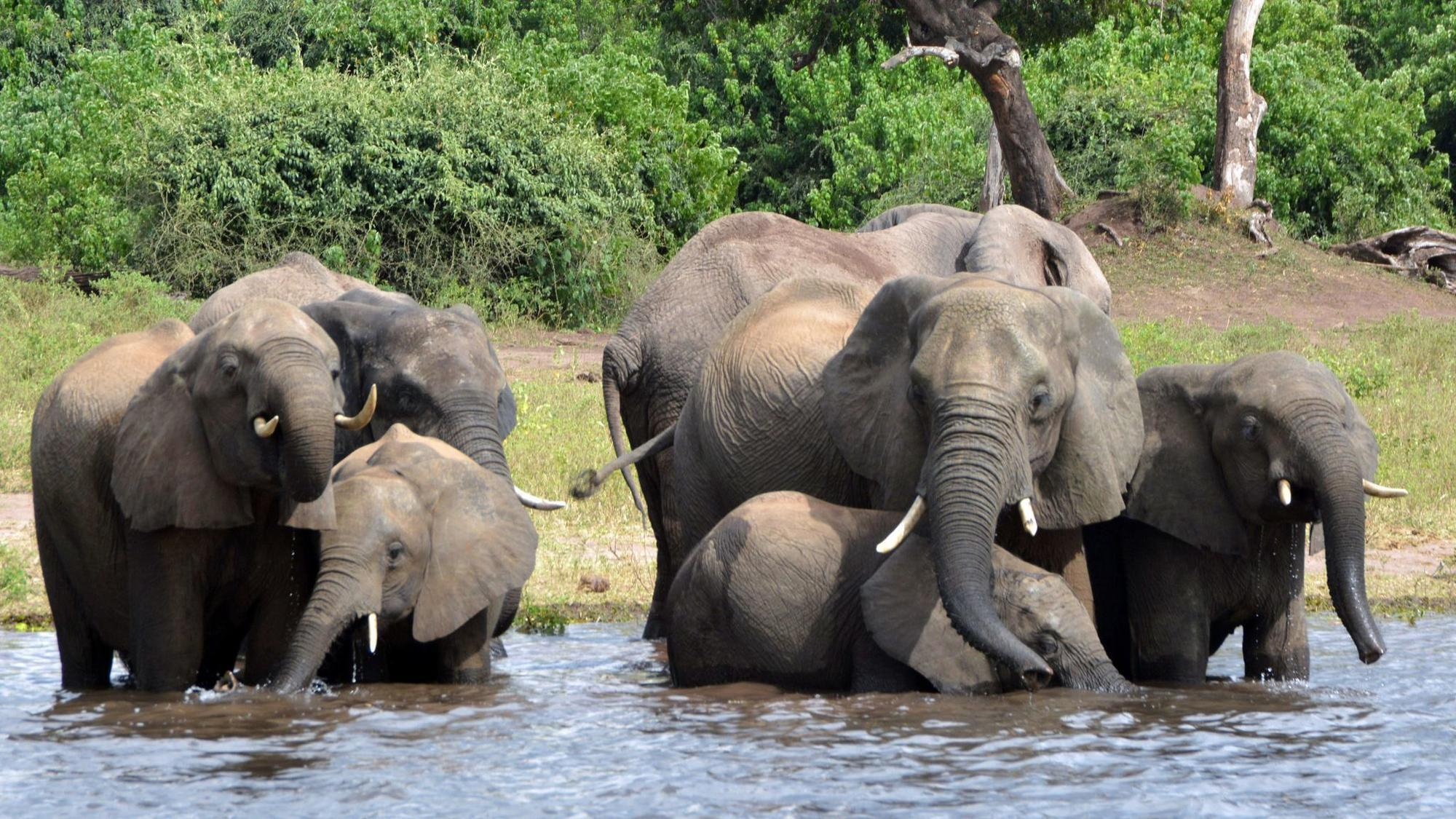Botswana lifts ban on elephant hunting, raising poaching fears