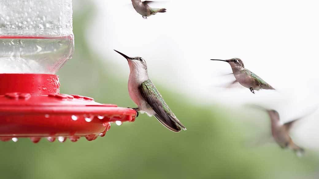 Three Best Hummingbird Feeders Chicago Tribune
