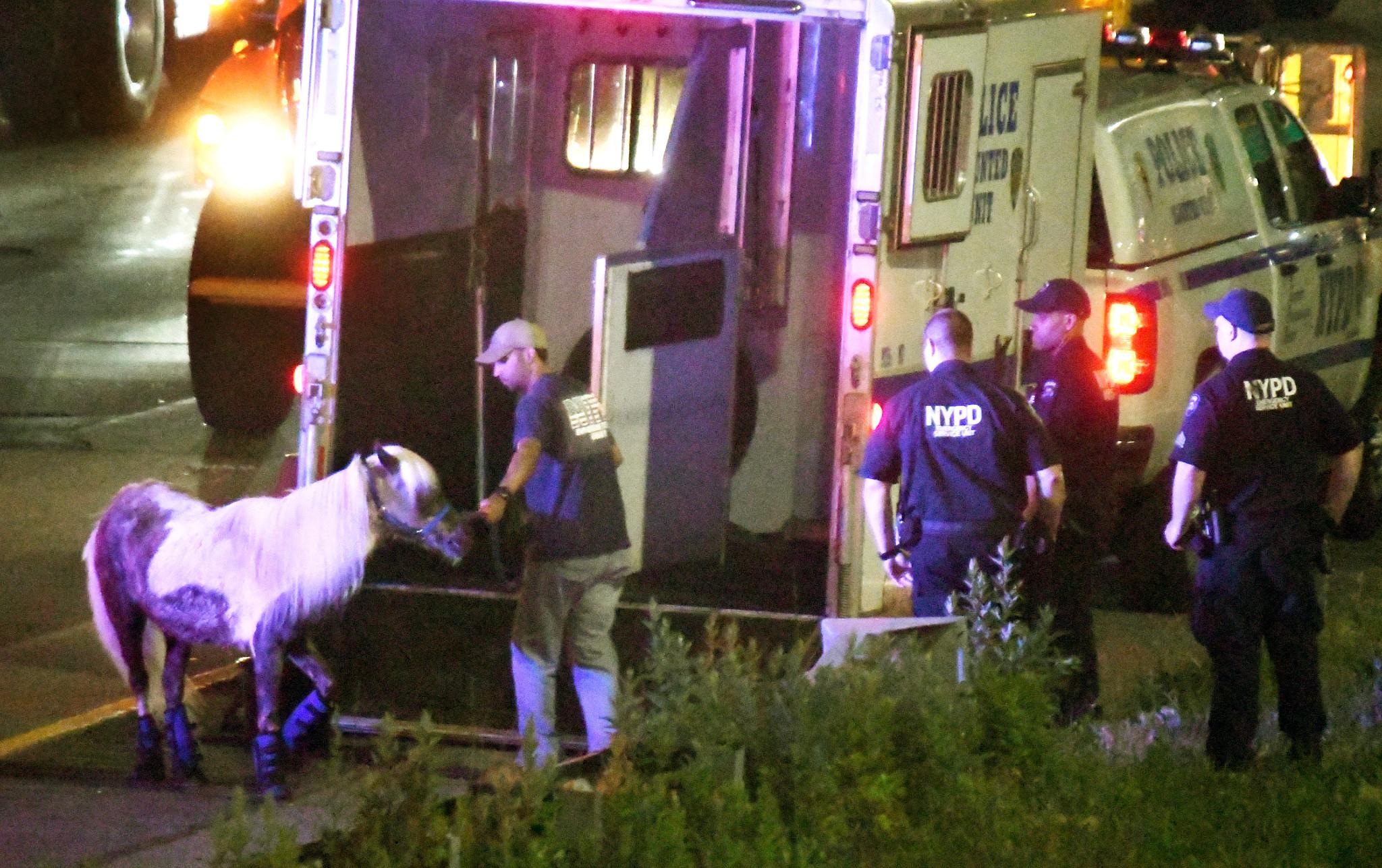 Horse killed in weird crash on New England Thruway in Bronx