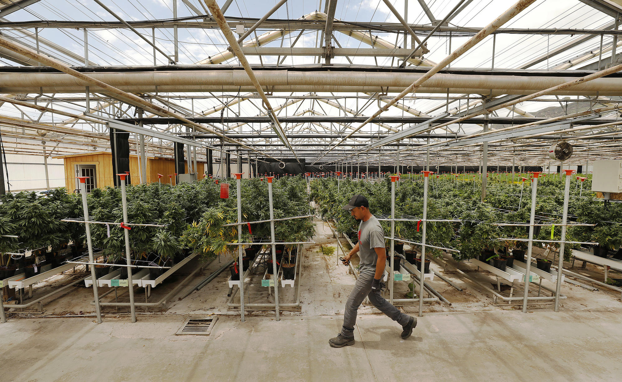 The world's largest pot farms, and how Santa Barbara opened