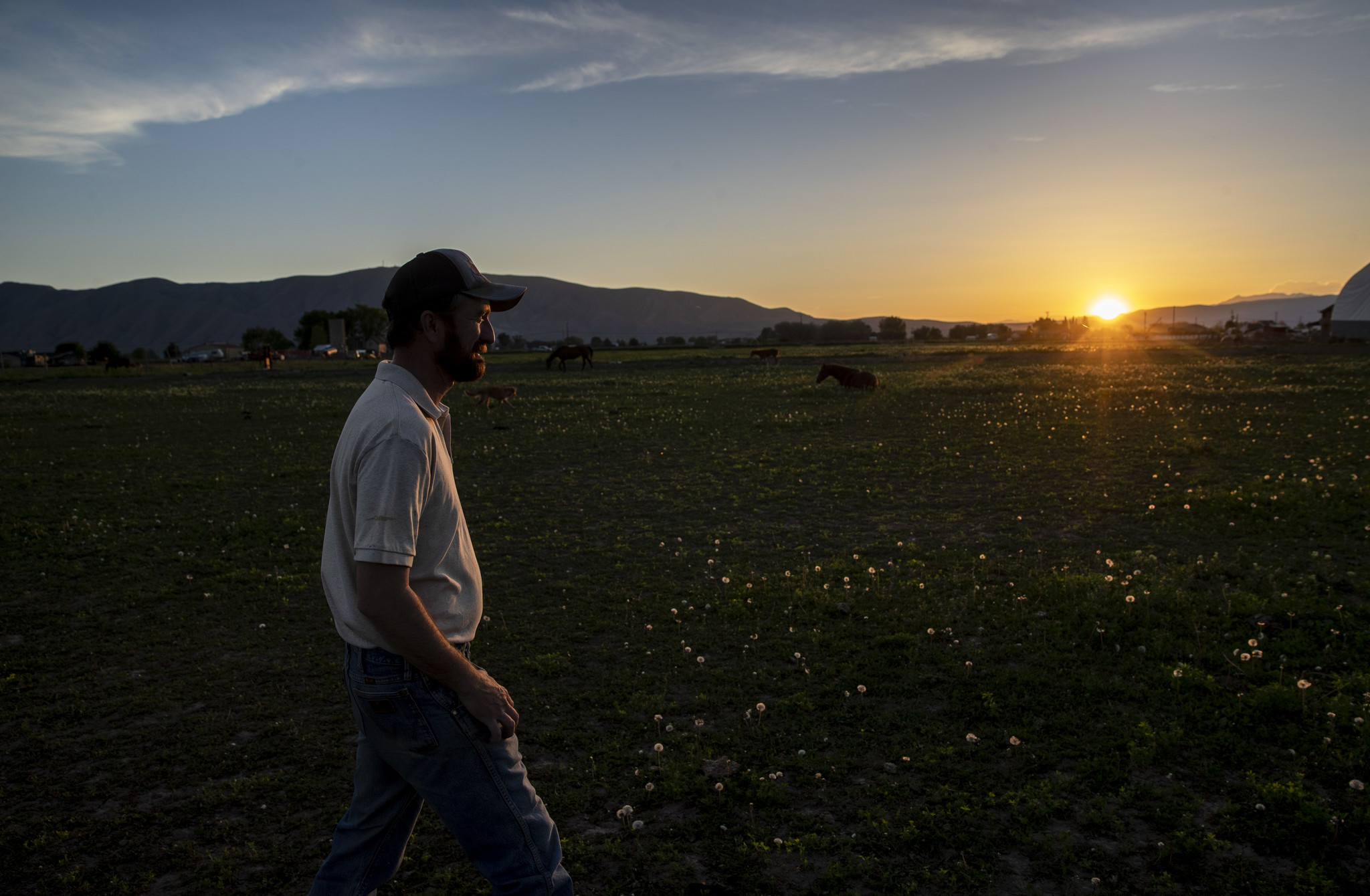 BENJAMIN, UTAH — TUESDAY, JUNE 4, 2019: Nathan Ivie walks through a pasture as the sun sets at his