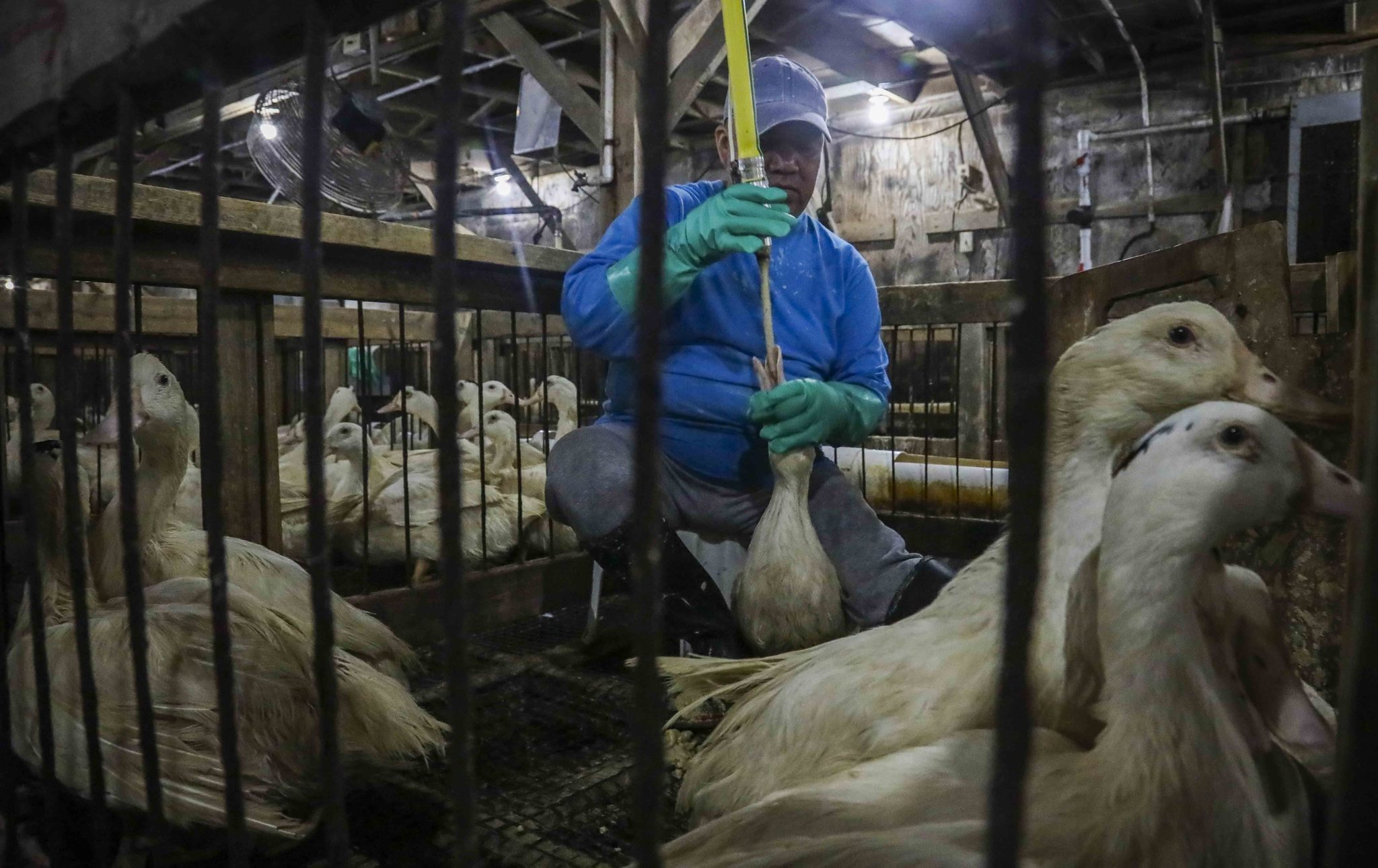 Ducking the hard issues: The city's foie gras ban works more as symbolism than as policy