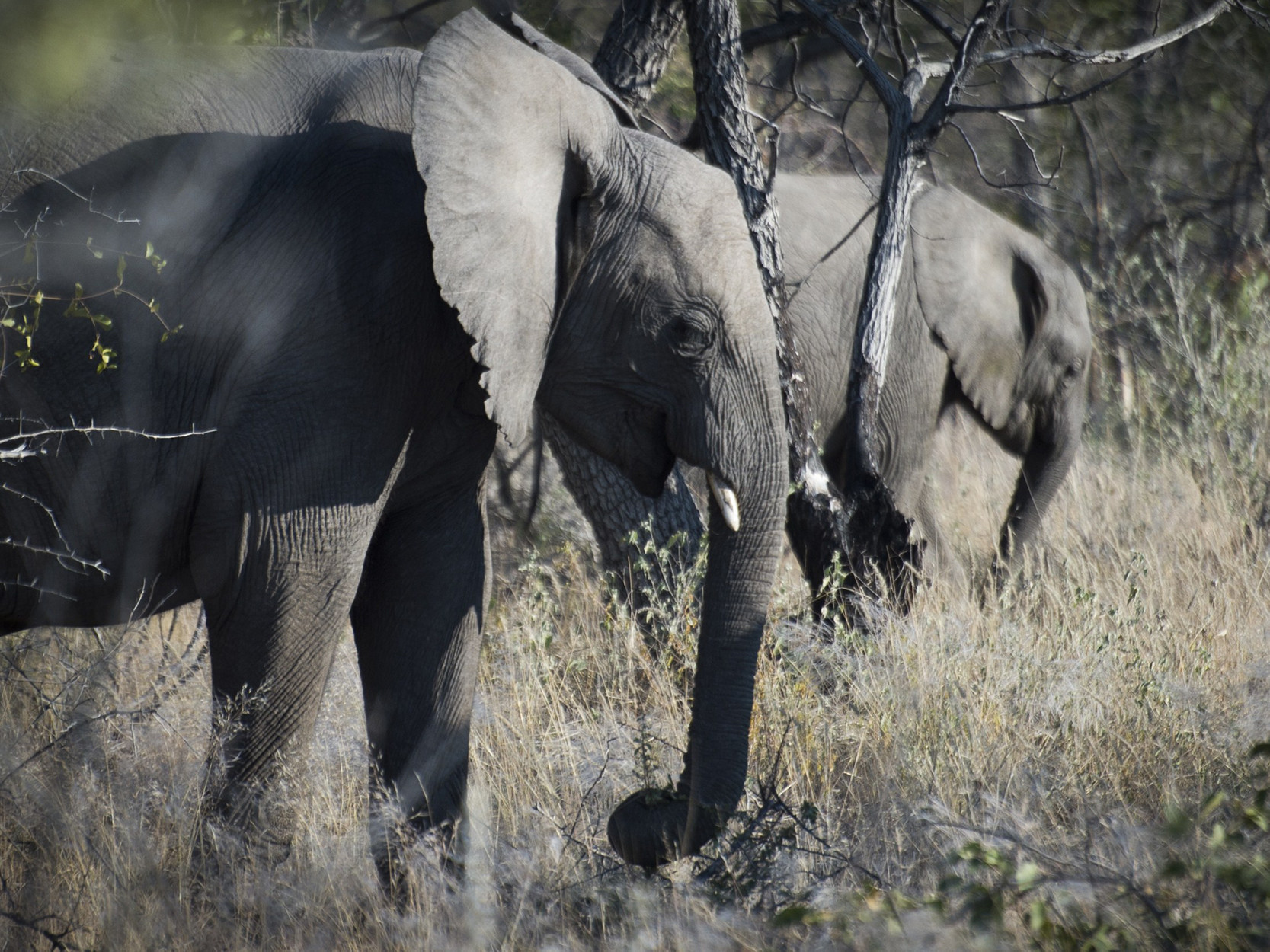Elephant kills Austrian tourist, 59, during Namibian camping trip