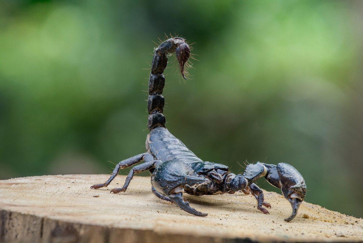 Passenger stung repeatedly by scorpion during flight: report