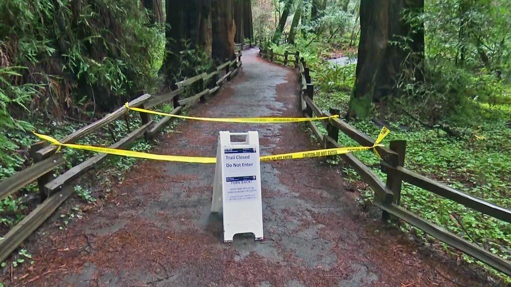 Hiker killed by falling 200-foot tall redwood tree in California