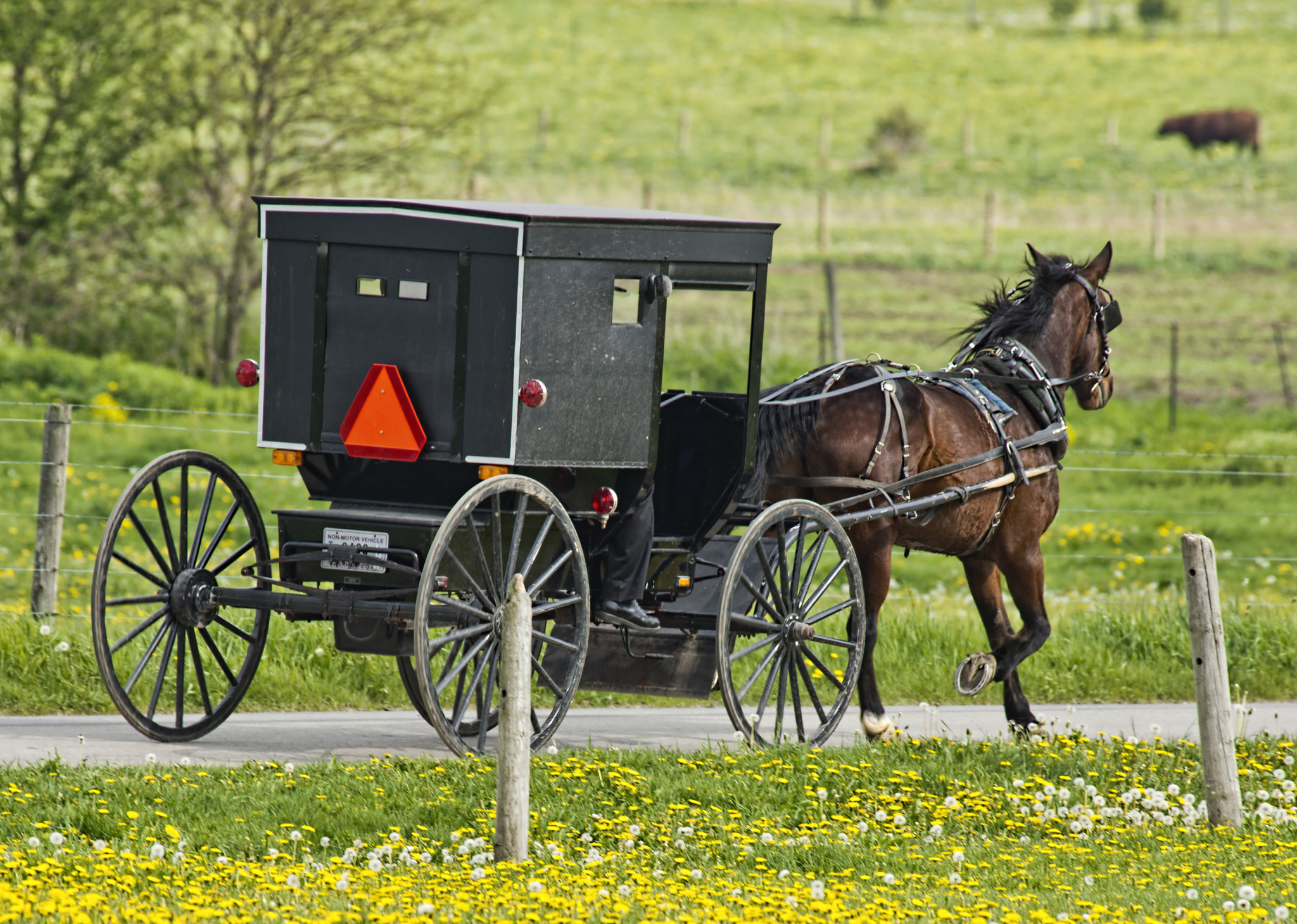 Four Michigan men charged in drunken horse and buggy ride