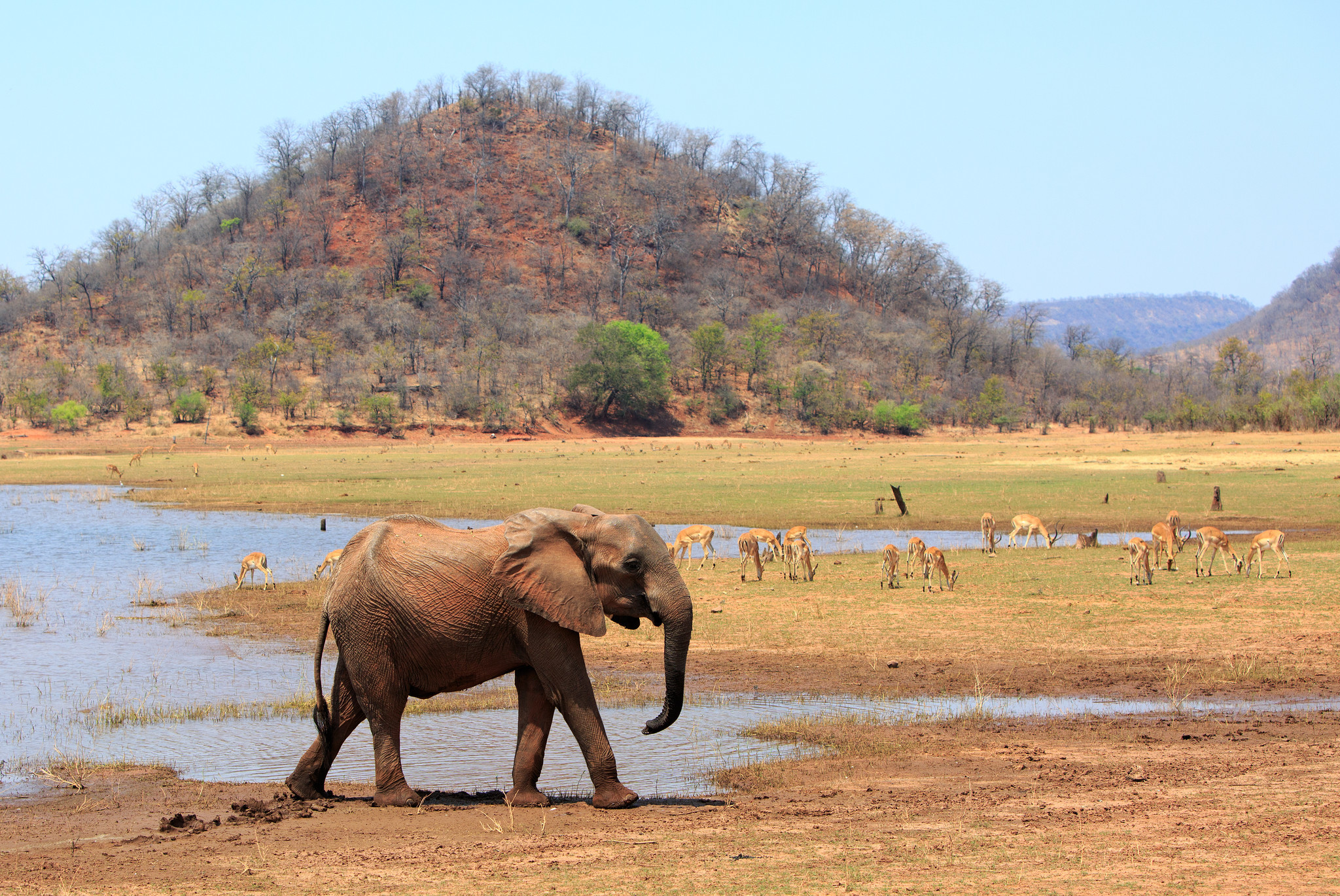 Zimbabwe park rangers drown after poachers overpower them
